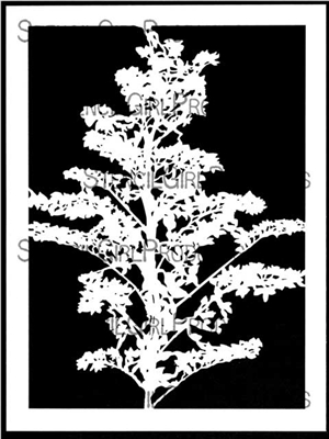 Branching Blossoms Silhouette Stencil by Cecilia Swatton