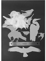 Various Bird StencilGuts Shapes